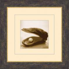 "Seashells in Sepia B 15 1/2"" Square Wall Art"