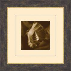 "Seashells in Sepia D 15 1/2"" Square Wall Art"