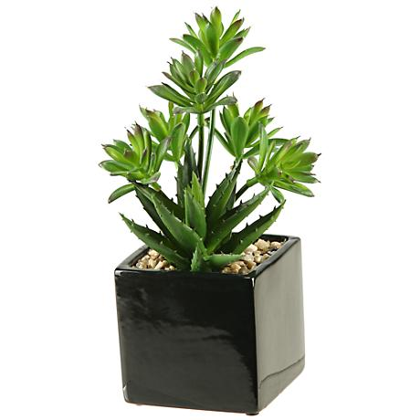 "Green Mini Dracaena and Aloe 11""H in Square Ceramic Planter"