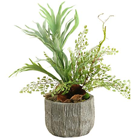 "Mixed Mini Staghorn and Flat Iron Fern 20"" High in Bowl"