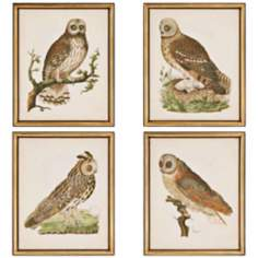 Set of 4 Nozeman Owls Wall Art Prints