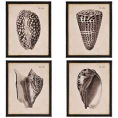 "Shells 22"" High Set of 4 Scientific Framed Wall Art"