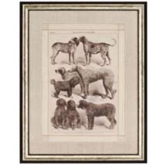 International Dog Show II Framed Wall Art