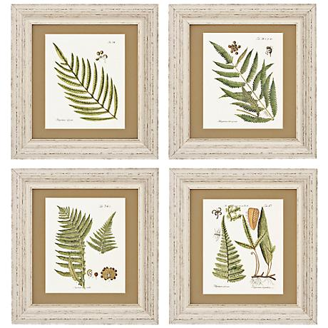 "Set of 4 Fern I/II/III/IV 18"" High Wall Art Prints"