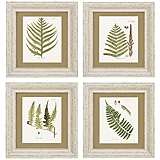"Set of 4 Fern V/VI/VII/VIII 18"" High Wall Art Prints"