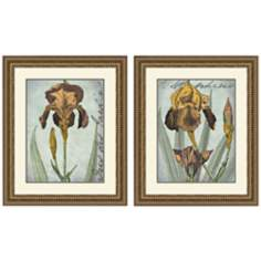 "Set of 2 Irises Golden 35 1/4"" High Framed Art Prints"