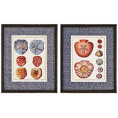 "Set of 2 Sand Dollars 22"" High Wall Art"
