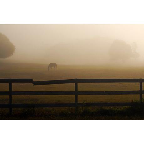 "Horse in Misty Pasture 24"" Wide Sepia Giclee Wall Art"
