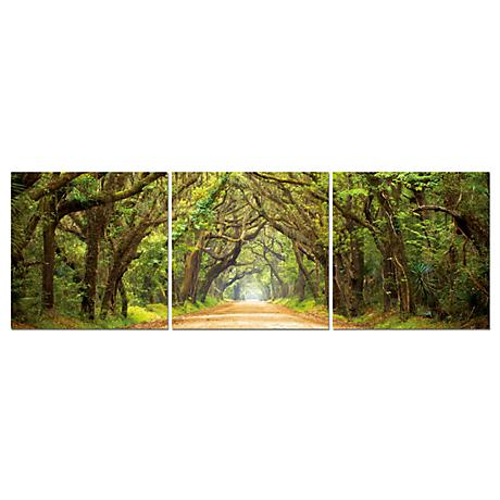 Tunnel Of Trees Print Triptych Wall Art