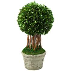Preserved Large Single Boxwood Ball in Ceramic Planter