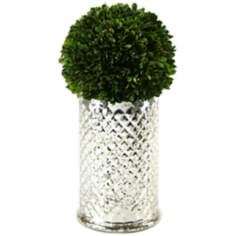 Preserved Boxwood Ball in Quilted Glass Vase