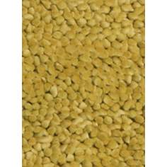 Contempo Yellow Area Rug