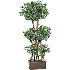 Silk Mini Ficus Tree in Wooden Pot