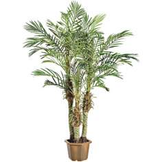 Faux Robellini Palm Tree in Wood Pot