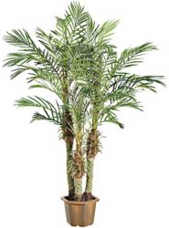 Faux Palm Tree at LAMPS PLUS