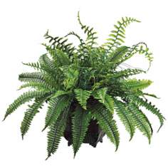 Green Fern in Black Metal Planter