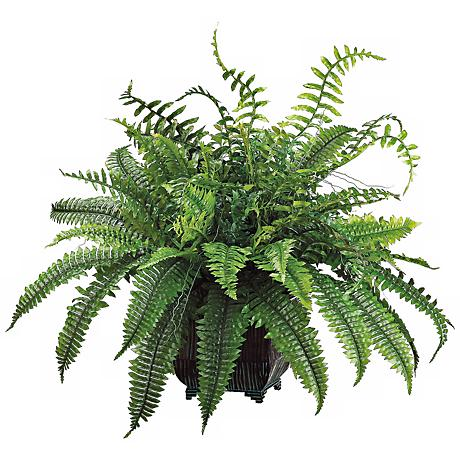 "Green 24"" High Fern in Black Metal Planter"