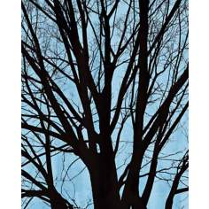 "Blue Tree Poetry Center Giclee 24"" High Canvas Wall Art"