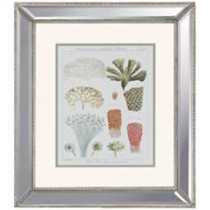 Coral Classification I Framed Wall Art