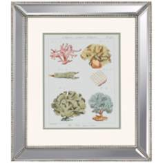 Coral Classification II Framed Wall Art