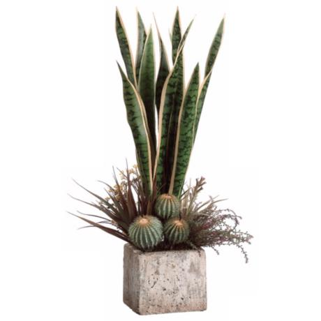 Sanseveria, Lavender and Cactus Garden Arrangement
