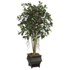 Ficus Tree With Moss Botanical Arrangement