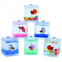 LED Aqua Box Fish Bowl