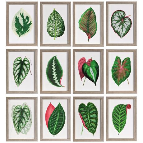 Uttermost Set of 12 Leaves I-XII Botanical Wall Art Prints