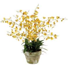 "Jane Seymour 26"" Yellow Oncidium Orchid in Clay Pot"
