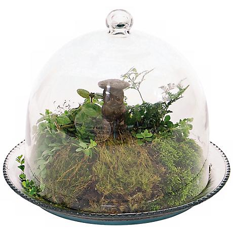 "Bell Glass 10"" Wide Jar Terrarium III"