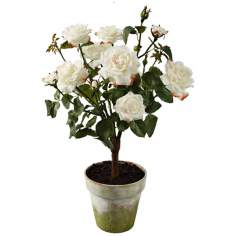 "Jane Seymour 27"" High Champagne Potted Silk Rose Plant"