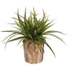 Faux Burlap Grass in Bark Wood Pot