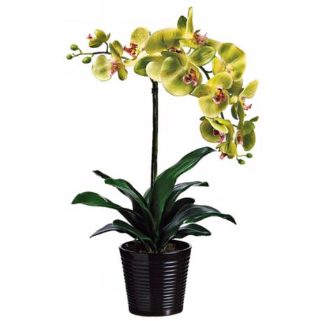 "Potted Green and Burgundy 23"" High Faux Orchids"