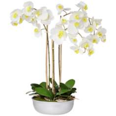 Triple White Moth Orchids in Silver Ceramic Pot