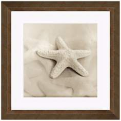 "Sepia Coastal I 18 1/2"" Square Still Life Photo Wall Art"
