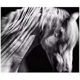 "Andalusian I 24 1/2"" Wide Framed Horse Wall Art"