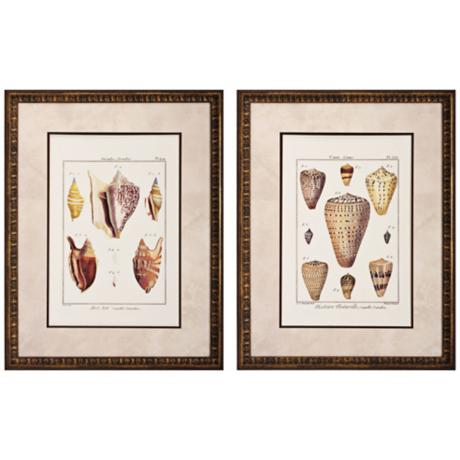 "Set of 2 Cone/Strombe 27"" High Framed Seashell Wall Art"