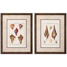 "Set of 2 Rostellaire/Pyrule 27"" High Seashell Wall Art"