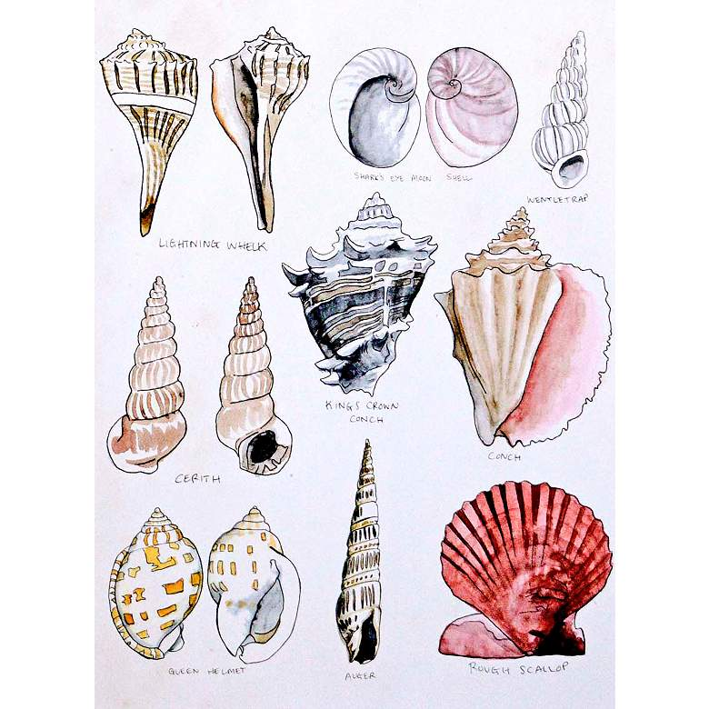 "Seashell Sketch II 38"" High Framed Giclee Wall Art more views"